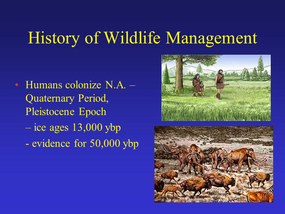 History of Wildlife Management Large mammal extinctions (exploitation?) = 66% of megafauna extinct