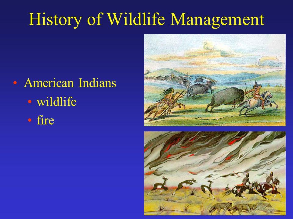History of Wildlife Management 500 ybp, Europeans arrive…. Spanish bring horses, livestock