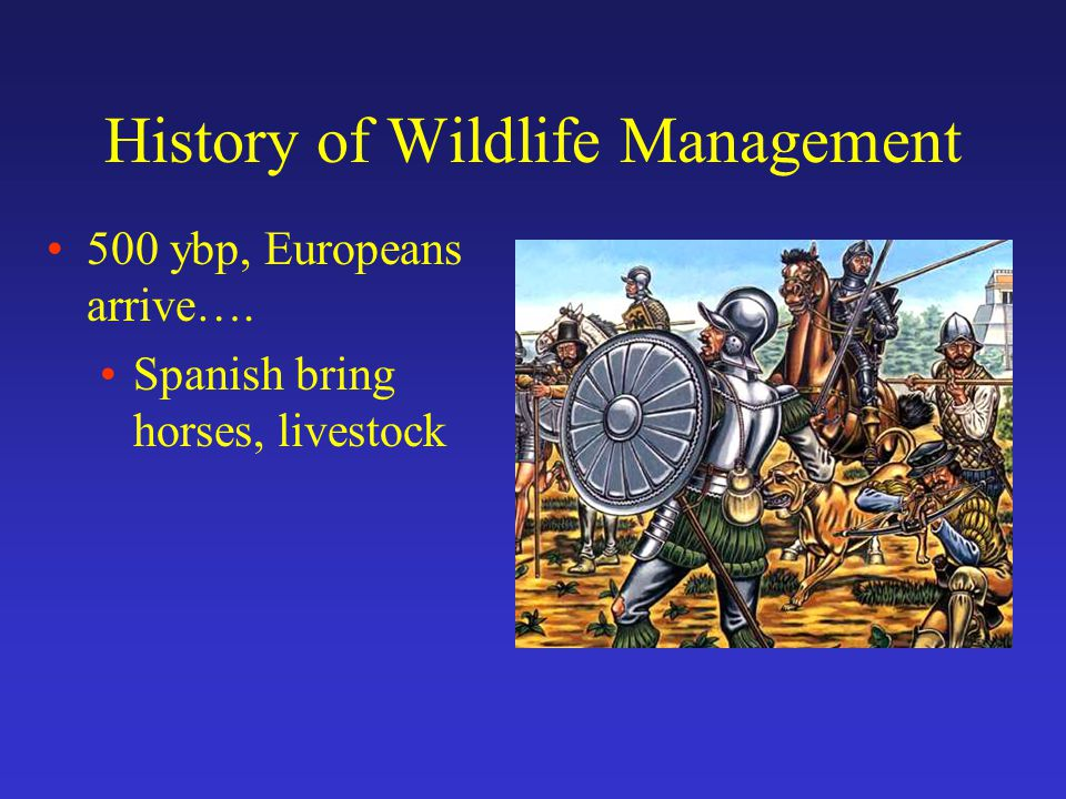 History of Wildlife Management 500 ybp, Europeans arrive…. Spanish bring horses, livestock