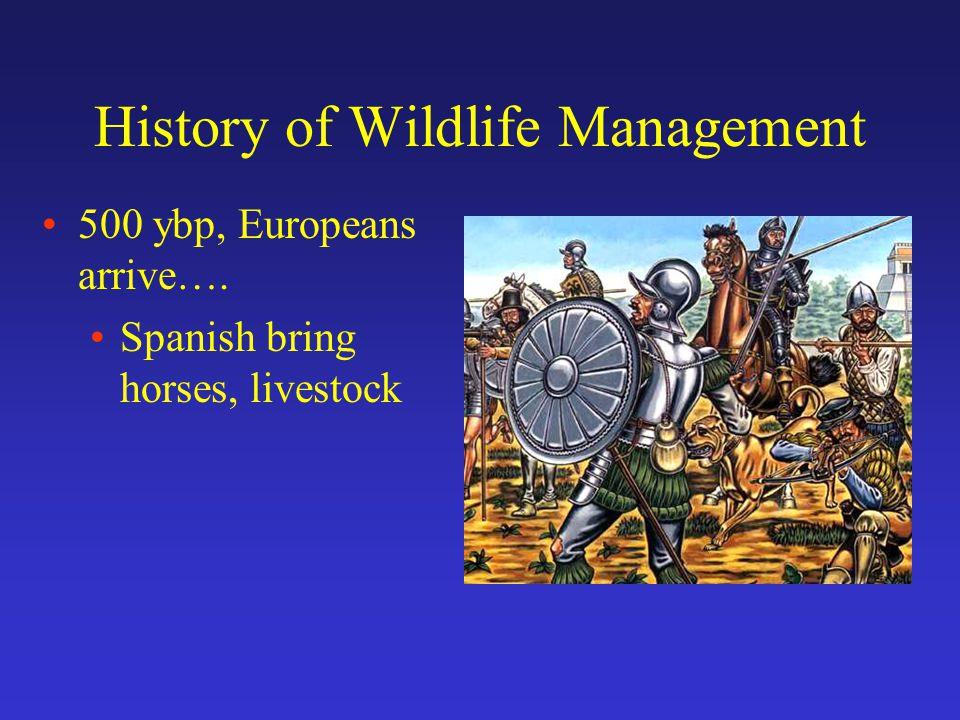 History of Wildlife Management 500 ybp, Europeans arrive….