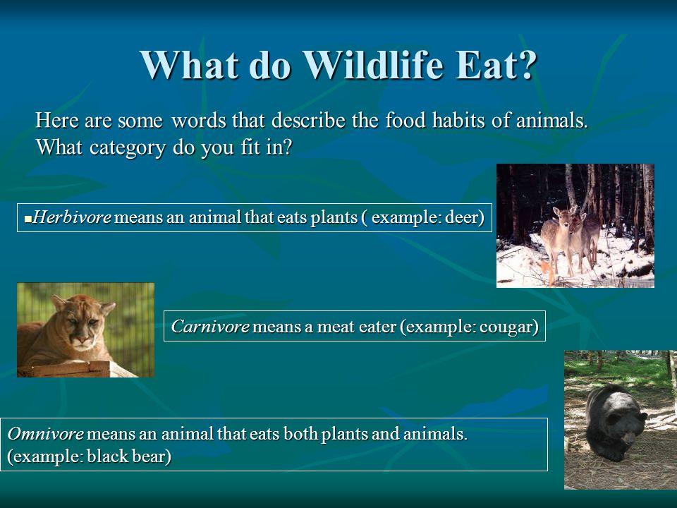 How Do Wildlife Get Their Food.