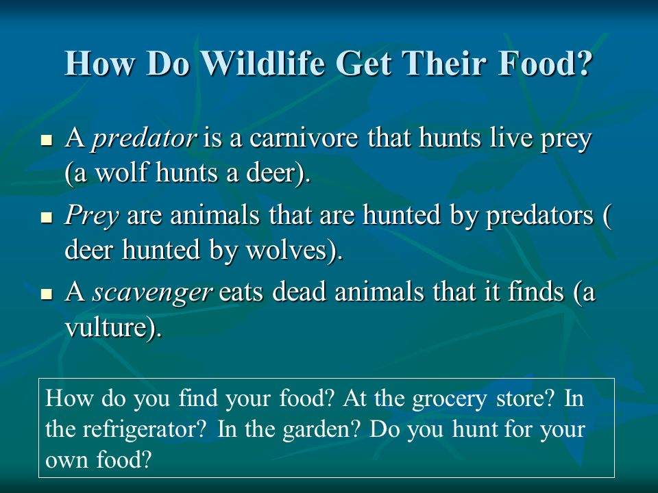 How Do Wildlife Get Their Food.