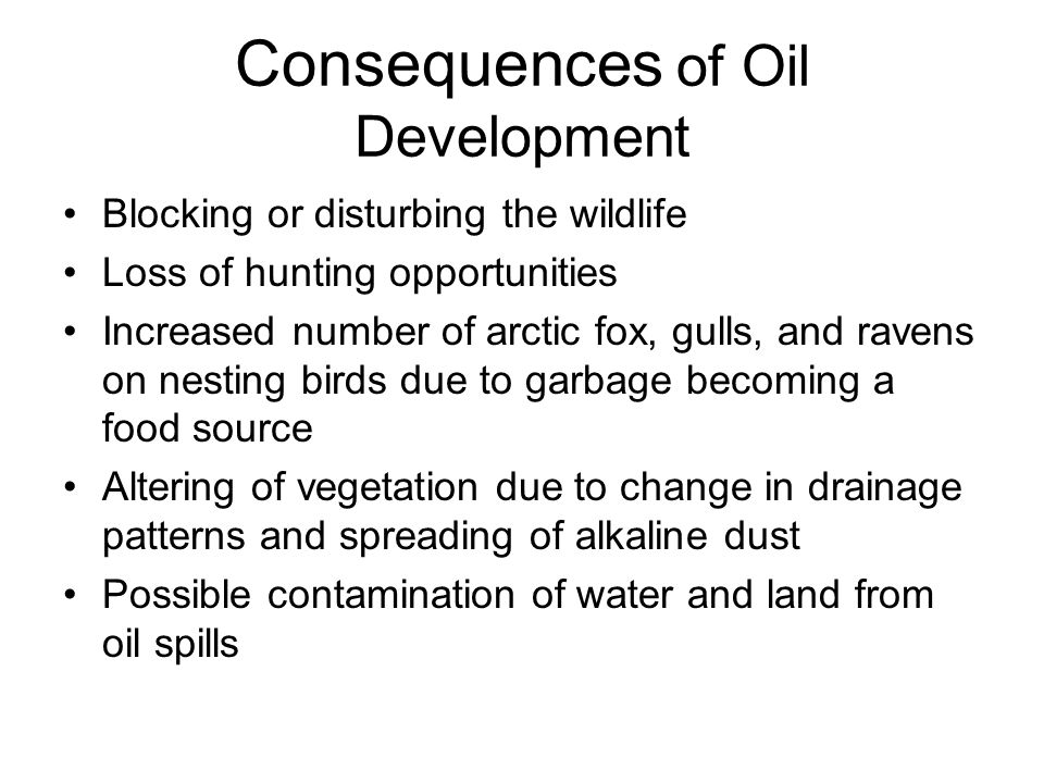 Consequences of Oil Development Blocking or disturbing the wildlife Loss of hunting opportunities Increased number of arctic fox, gulls, and ravens on nesting birds due to garbage becoming a food source Altering of vegetation due to change in drainage patterns and spreading of alkaline dust Possible contamination of water and land from oil spills