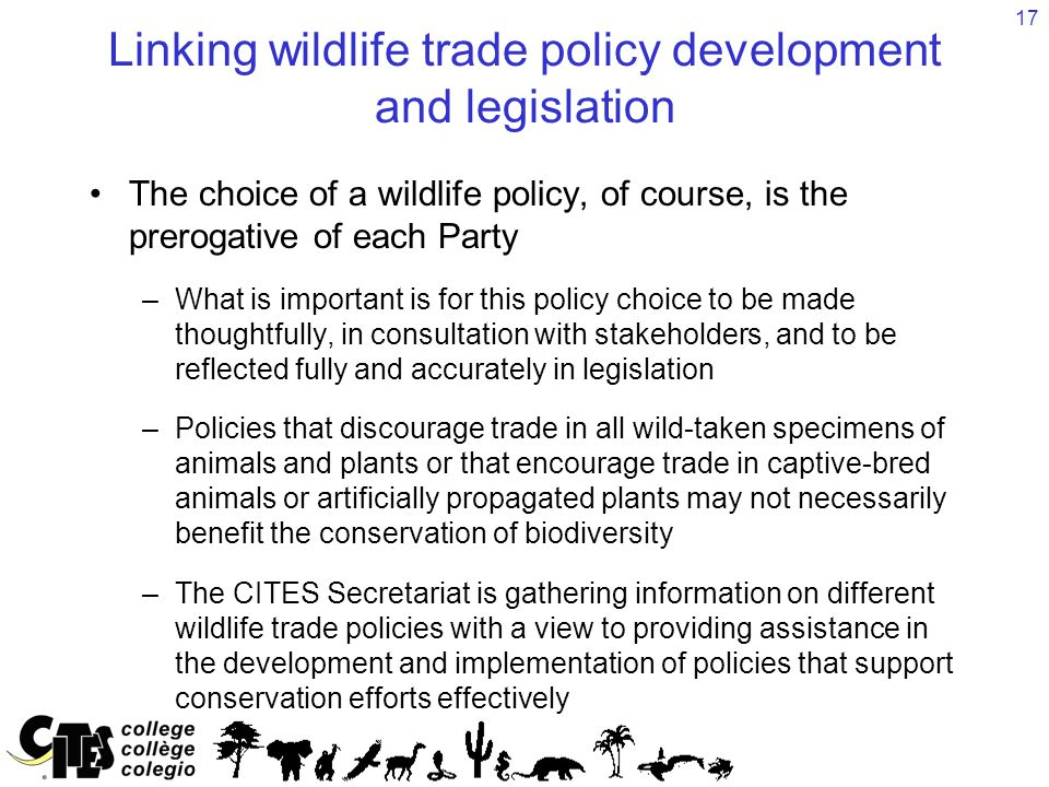 17 Linking wildlife trade policy development and legislation The choice of a wildlife policy, of course, is the prerogative of each Party –What is imp
