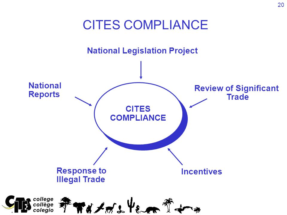 20 CITES COMPLIANCE CITES COMPLIANCE National Legislation Project Incentives Response to Illegal Trade National Reports Review of Significant Trade