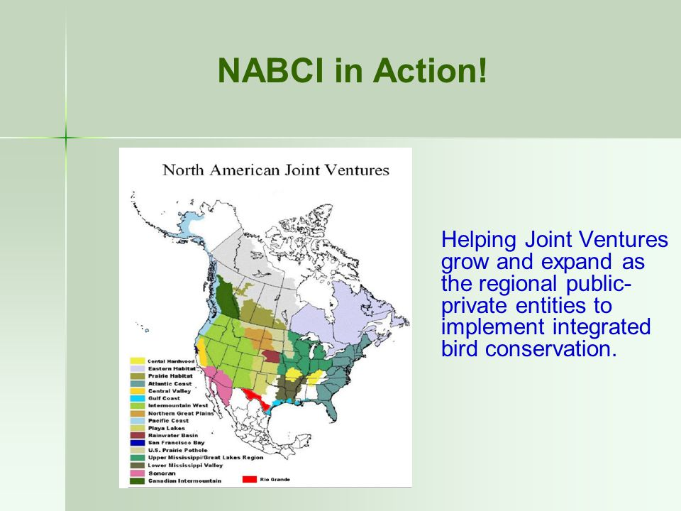 Helping Joint Ventures grow and expand as the regional public- private entities to implement integrated bird conservation. NABCI in Action!