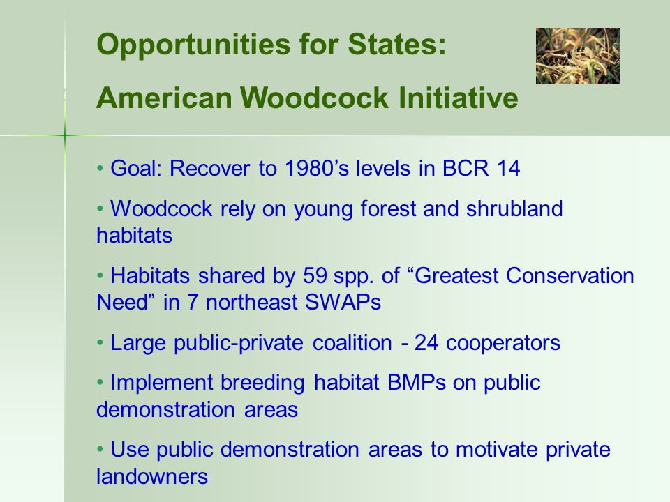 American Woodcock Initiative - WMI Opportunities for States: American Woodcock Initiative Goal: Recover to 1980's levels in BCR 14 Woodcock rely on yo