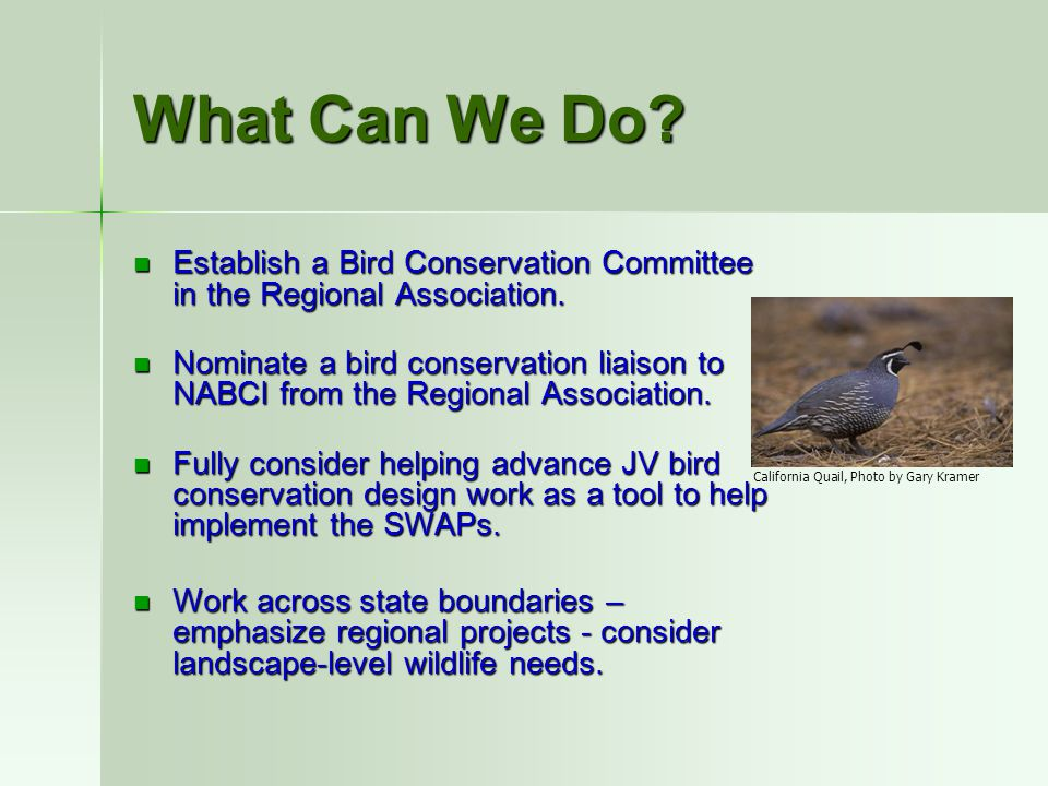What Can We Do? Establish a Bird Conservation Committee in the Regional Association. Establish a Bird Conservation Committee in the Regional Associati