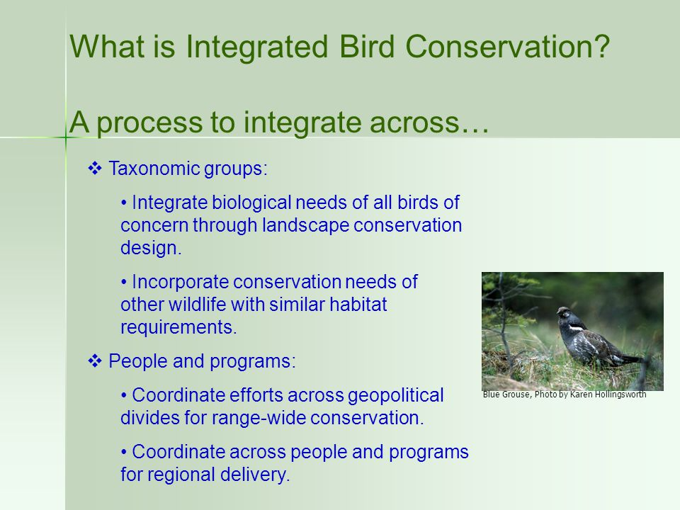 What is Integrated Bird Conservation? A process to integrate across…  Taxonomic groups: Integrate biological needs of all birds of concern through la