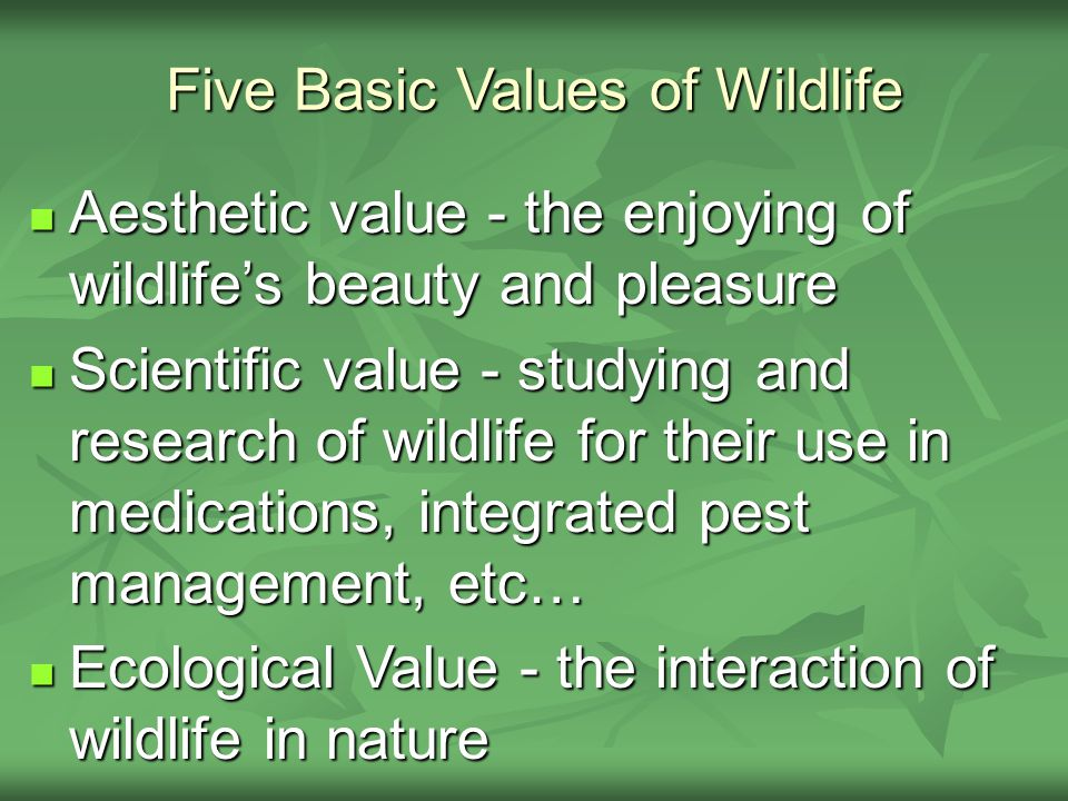Five Basic Values of Wildlife Aesthetic value - the enjoying of wildlife's beauty and pleasure Aesthetic value - the enjoying of wildlife's beauty and pleasure Scientific value - studying and research of wildlife for their use in medications, integrated pest management, etc… Scientific value - studying and research of wildlife for their use in medications, integrated pest management, etc… Ecological Value - the interaction of wildlife in nature Ecological Value - the interaction of wildlife in nature