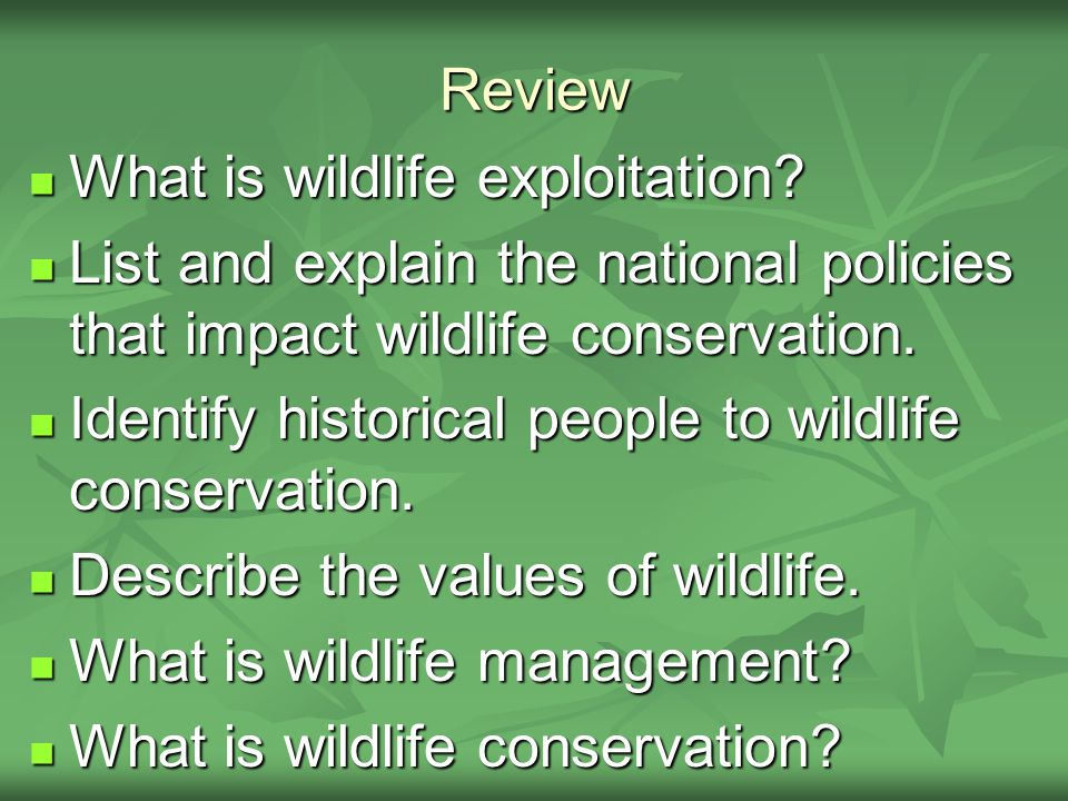 Review What is wildlife exploitation. What is wildlife exploitation.