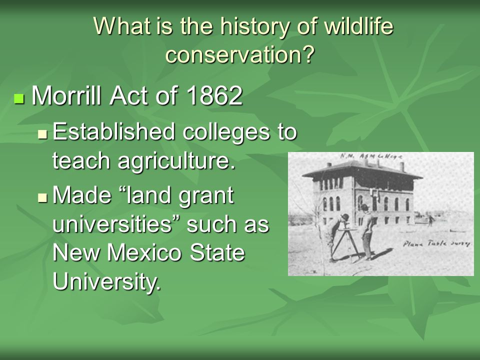What is the history of wildlife conservation.What is the history of wildlife conservation.