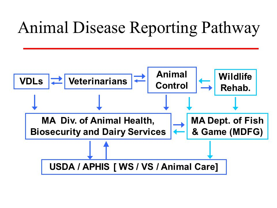 Animal Disease Reporting Pathway MA Div.
