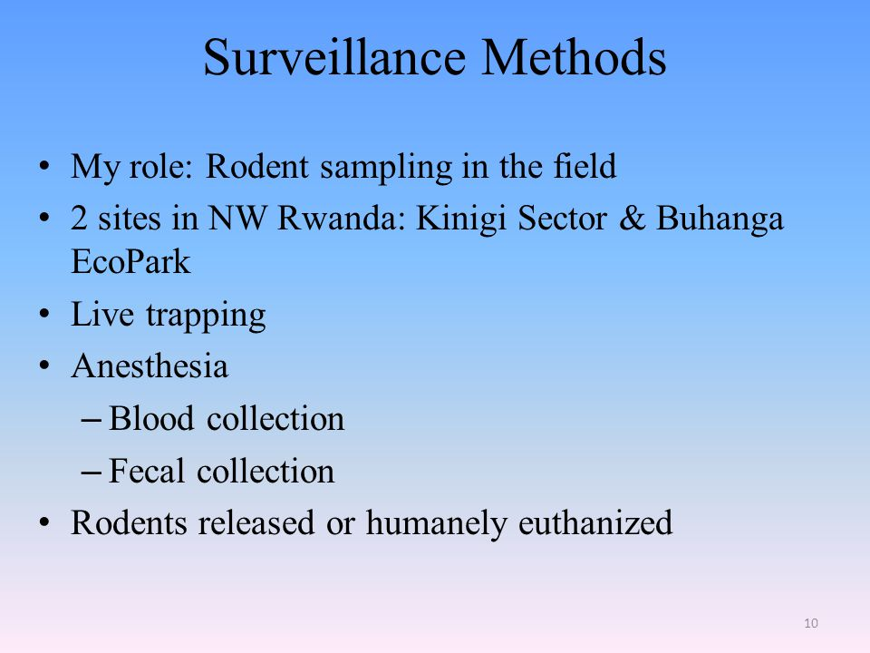 Surveillance Methods My role: Rodent sampling in the field 2 sites in NW Rwanda: Kinigi Sector & Buhanga EcoPark Live trapping Anesthesia – Blood collection – Fecal collection Rodents released or humanely euthanized 10