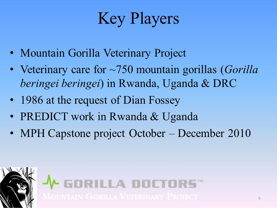 Key Players Mountain Gorilla Veterinary Project Veterinary care for ~750 mountain gorillas (Gorilla beringei beringei) in Rwanda, Uganda & DRC 1986 at the request of Dian Fossey PREDICT work in Rwanda & Uganda MPH Capstone project October – December 2010 9