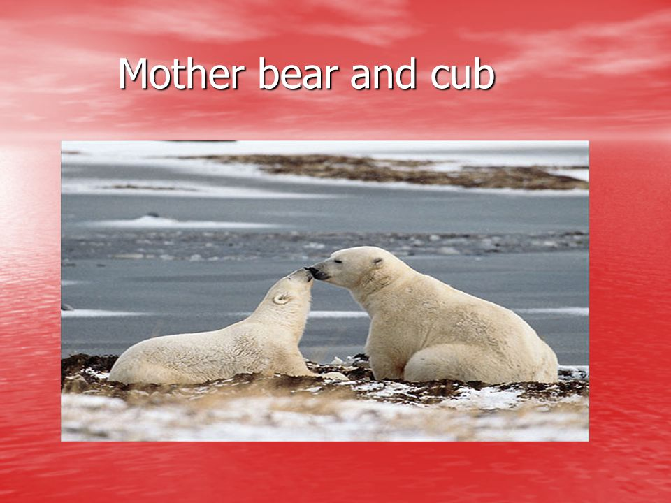 Mother bear and cub Mother bear and cub