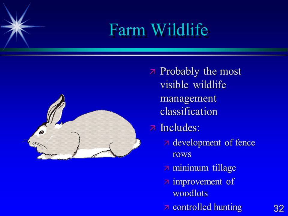 32 Farm Wildlife  Probably the most visible wildlife management classification  Includes:  development of fence rows  minimum tillage  improvement of woodlots  controlled hunting