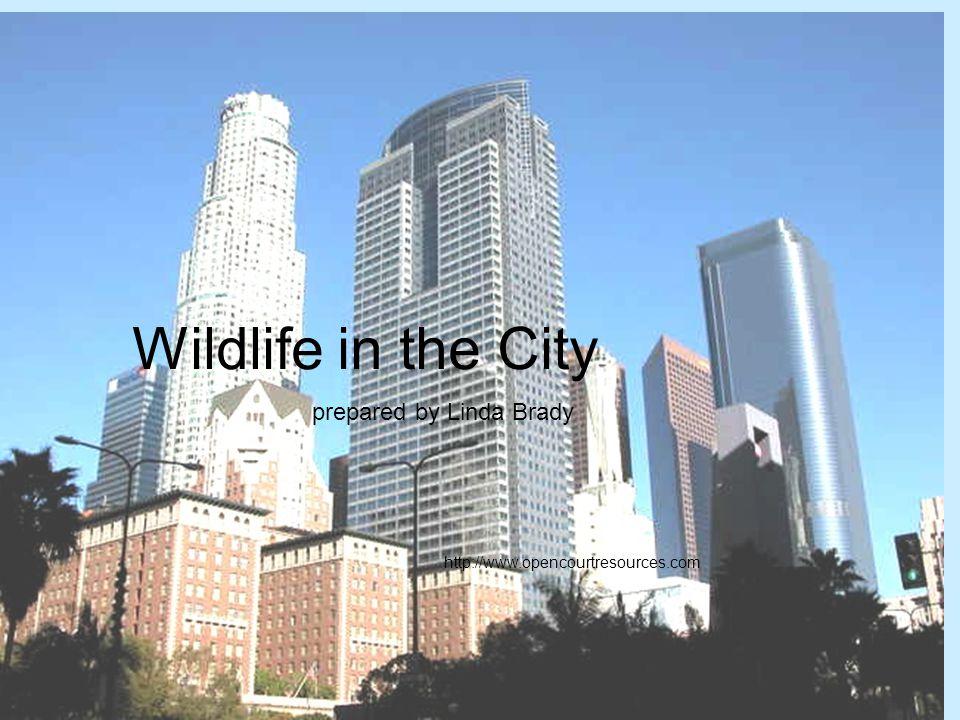 Wildlife in the City prepared by Linda Brady http://www.opencourtresources.com