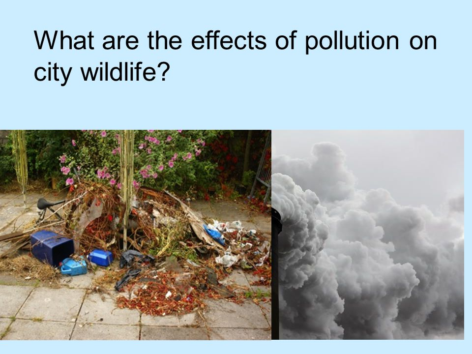 What are the effects of pollution on city wildlife?