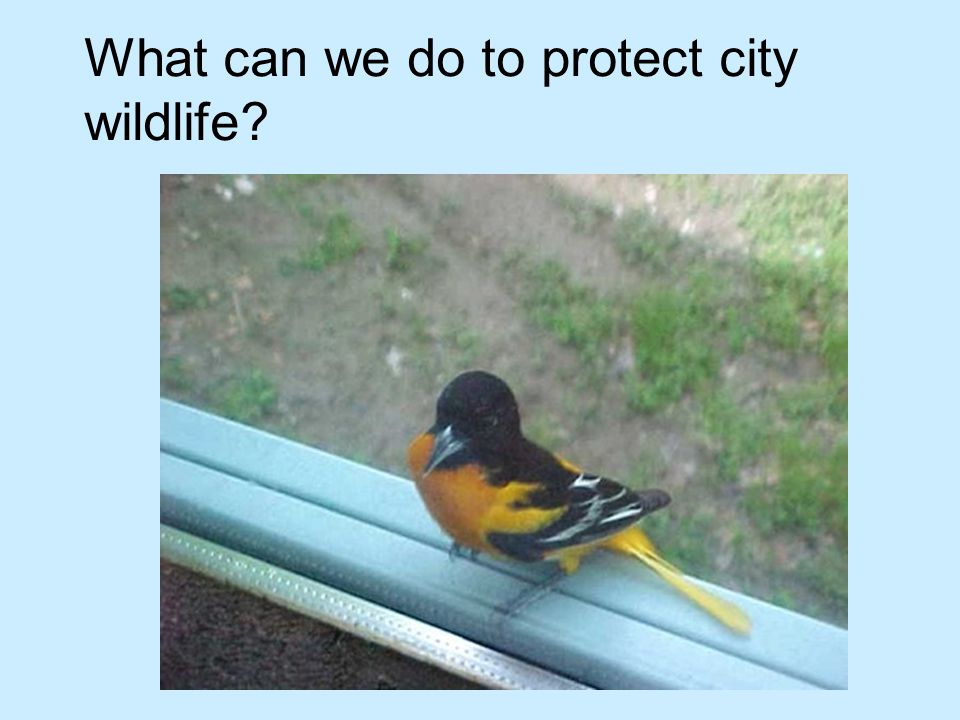 What can we do to protect city wildlife?