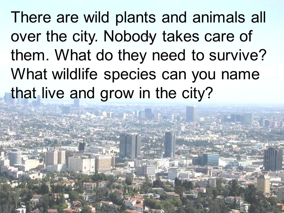 There are wild plants and animals all over the city. Nobody takes care of them. What do they need to survive? What wildlife species can you name that