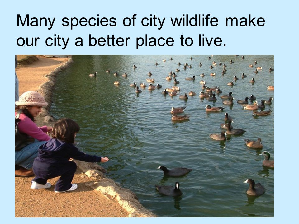 Many species of city wildlife make our city a better place to live.