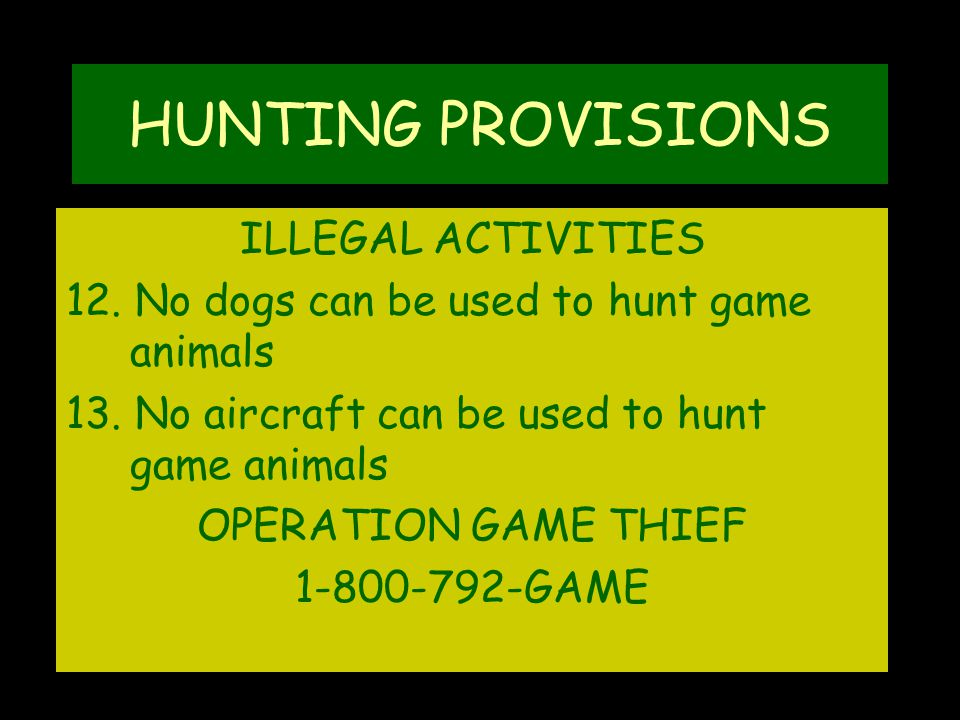 HUNTING PROVISIONS ILLEGAL ACTIVITIES 12. No dogs can be used to hunt game animals 13.