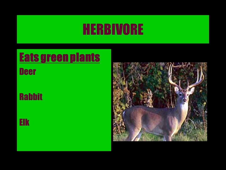 HERBIVORE Eats green plants Deer Rabbit Elk