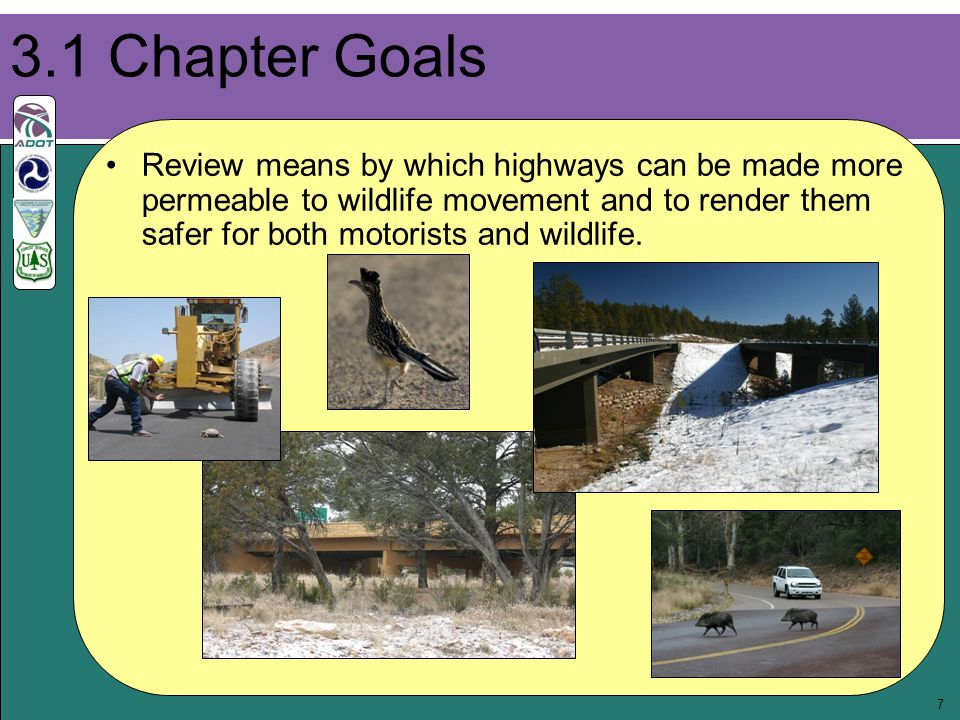7 Review means by which highways can be made more permeable to wildlife movement and to render them safer for both motorists and wildlife.