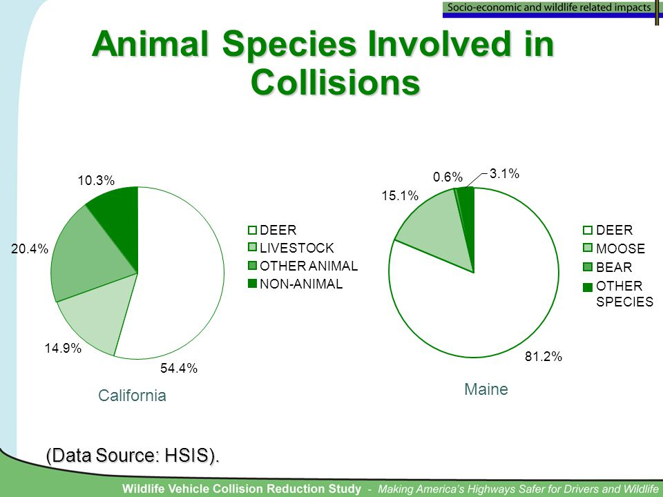 Animal Species Involved in Collisions California Maine 54.4% 14.9% 20.4% 10.3% DEER LIVESTOCK OTHER ANIMAL NON-ANIMAL (Data Source: HSIS). 81.2% 15.1%