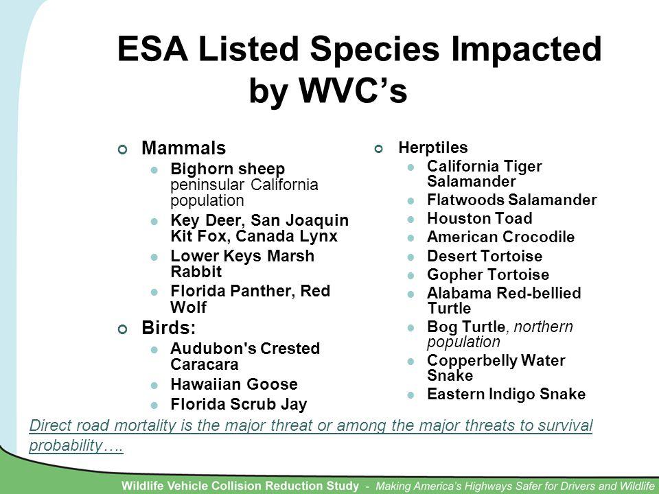 ESA Listed Species Impacted by WVC's Mammals Bighorn sheep peninsular California population Key Deer, San Joaquin Kit Fox, Canada Lynx Lower Keys Mars