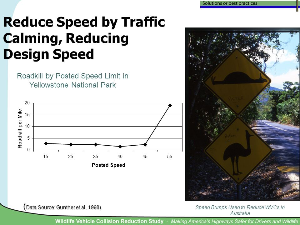 Reduce Speed by Traffic Calming, Reducing Design Speed Speed Bumps Used to Reduce WVCs in Australia Roadkill by Posted Speed Limit in Yellowstone Nati