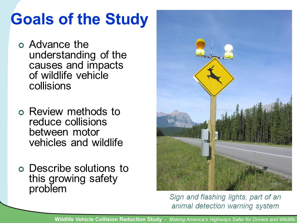 Goals of the Study Advance the understanding of the causes and impacts of wildlife vehicle collisions Review methods to reduce collisions between motor vehicles and wildlife Describe solutions to this growing safety problem Sign and flashing lights, part of an animal detection warning system