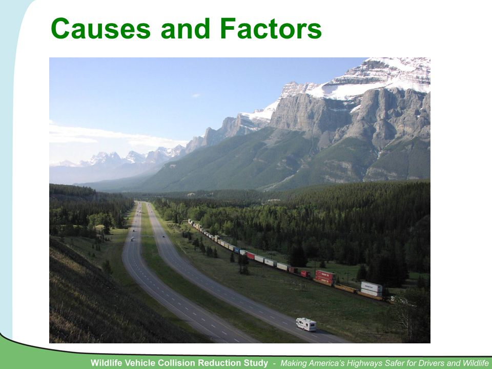 Causes and Factors