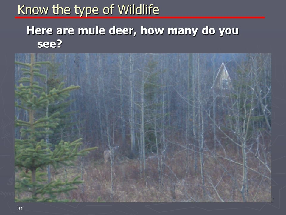 34 Know the type of Wildlife Here are mule deer, how many do you see 34