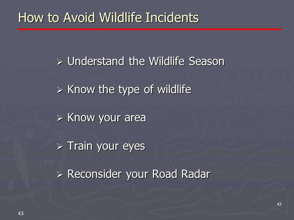 43 How to Avoid Wildlife Incidents  Understand the Wildlife Season  Know the type of wildlife  Know your area  Train your eyes  Reconsider your Road Radar 43