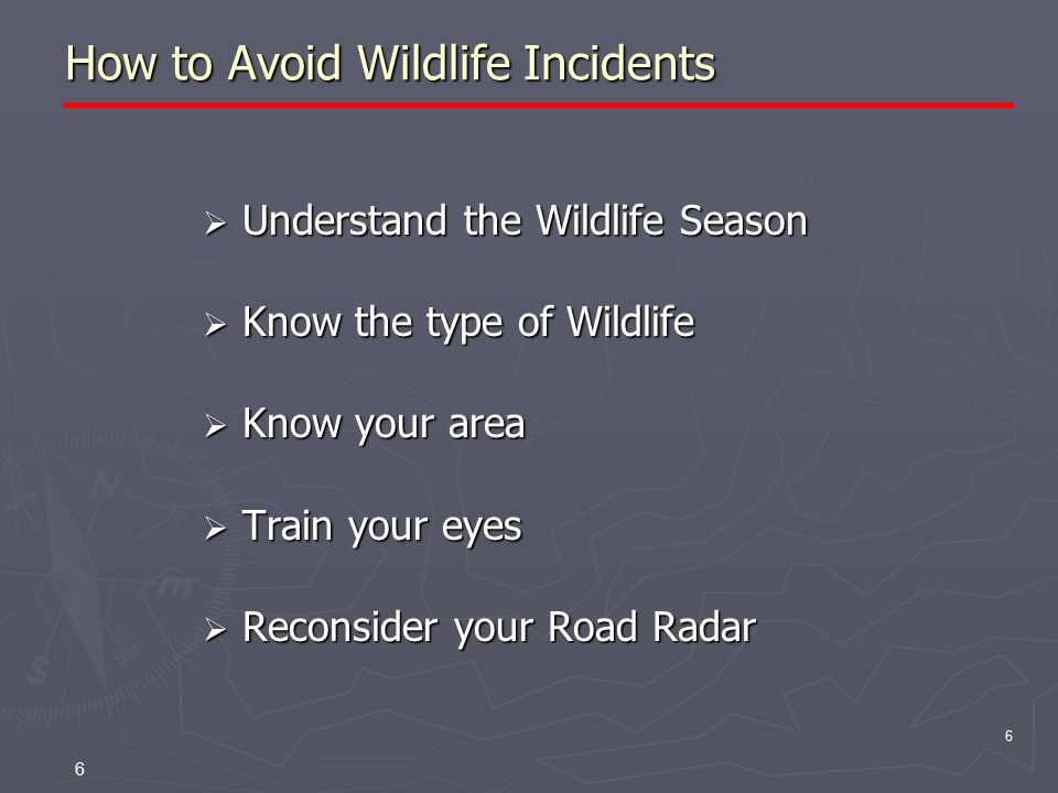 6 How to Avoid Wildlife Incidents  Understand the Wildlife Season  Know the type of Wildlife  Know your area  Train your eyes  Reconsider your Road Radar 6
