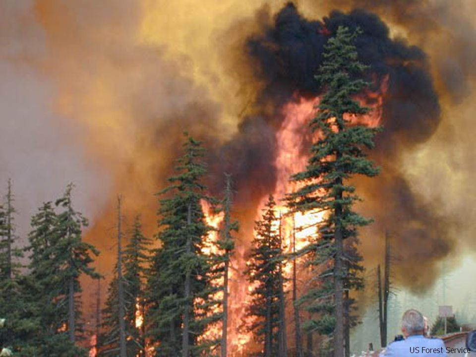 Ecological Role of Fire in Forest Ecosystems 1.Reduces probability of catastrophic fire 2.