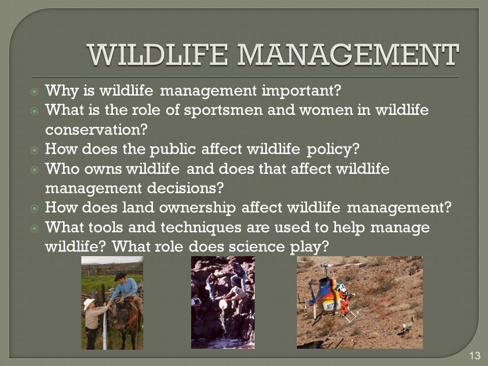  Why is wildlife management important.
