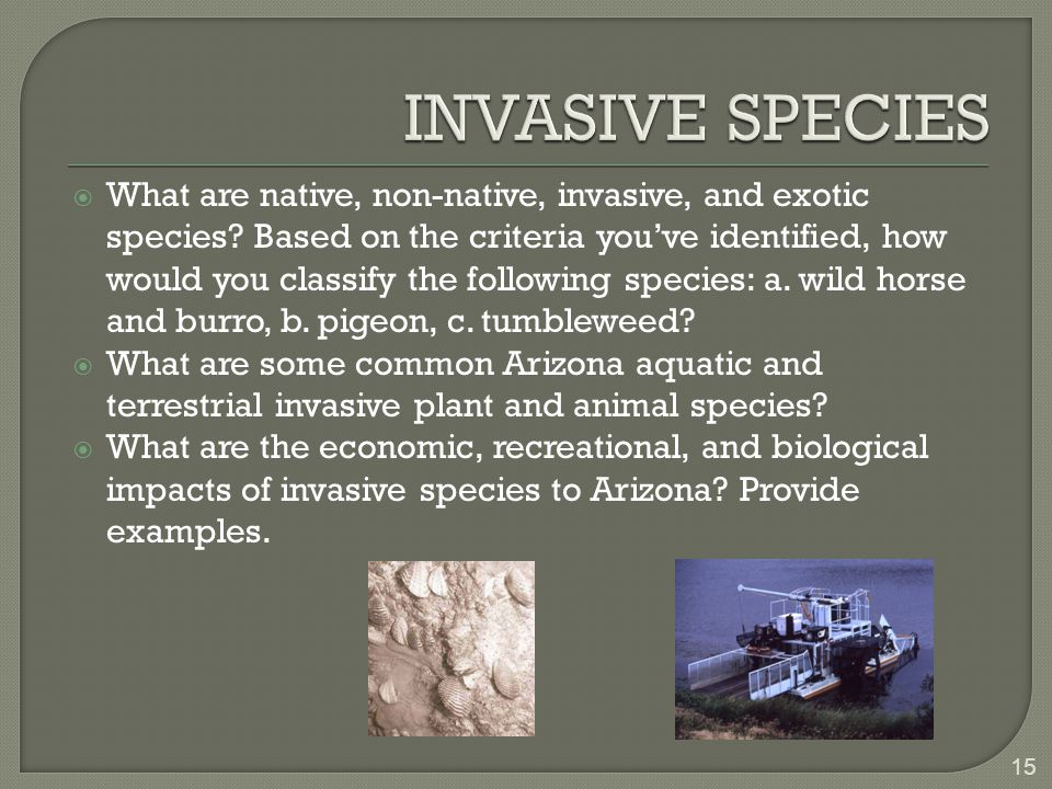  What are native, non-native, invasive, and exotic species.