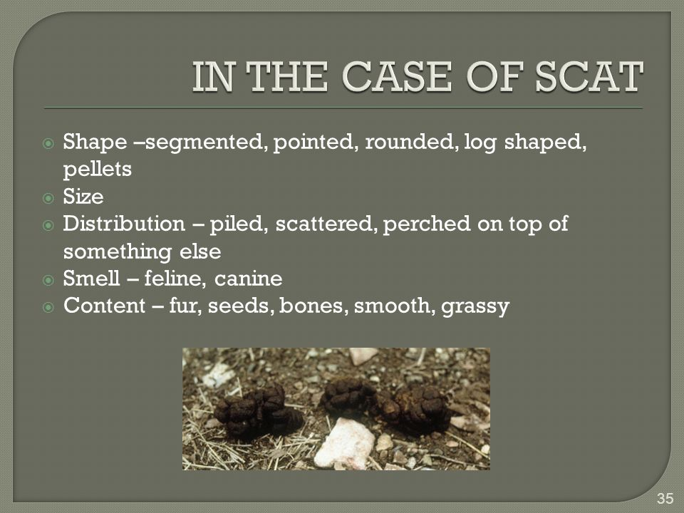  Shape –segmented, pointed, rounded, log shaped, pellets  Size  Distribution – piled, scattered, perched on top of something else  Smell – feline, canine  Content – fur, seeds, bones, smooth, grassy 35