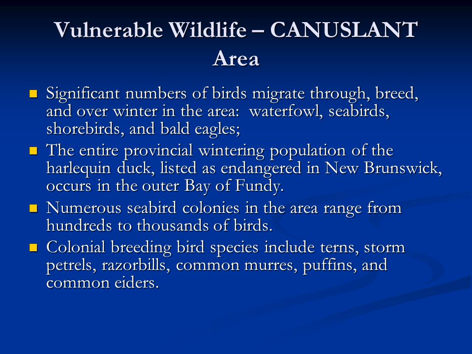 Vulnerable Wildlife – CANUSLANT Area Significant numbers of birds migrate through, breed, and over winter in the area: waterfowl, seabirds, shorebirds, and bald eagles; Significant numbers of birds migrate through, breed, and over winter in the area: waterfowl, seabirds, shorebirds, and bald eagles; The entire provincial wintering population of the harlequin duck, listed as endangered in New Brunswick, occurs in the outer Bay of Fundy.