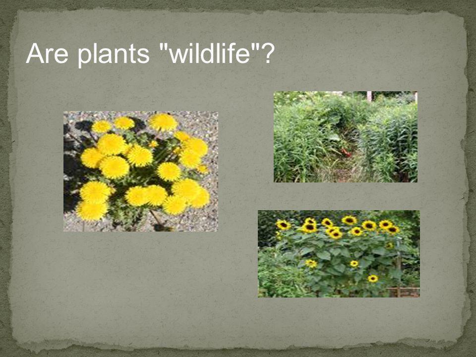 Are plants wildlife