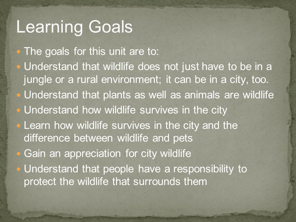The goals for this unit are to: Understand that wildlife does not just have to be in a jungle or a rural environment; it can be in a city, too. Unders