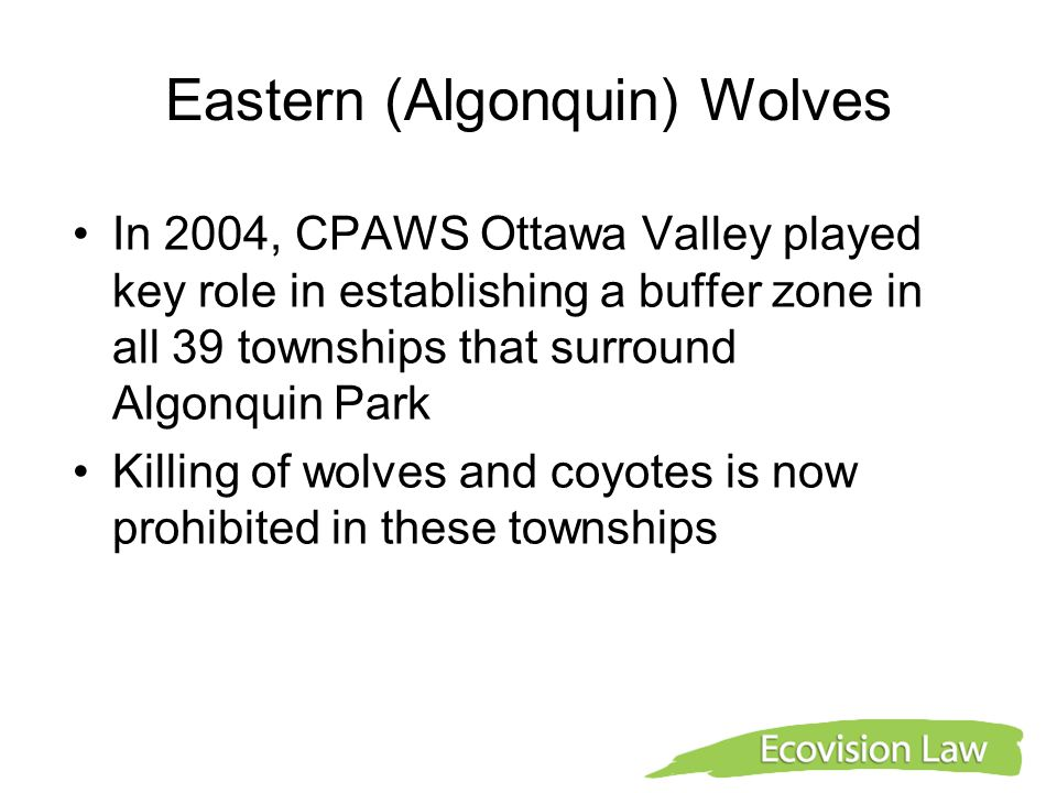 Eastern (Algonquin) Wolves In 2004, CPAWS Ottawa Valley played key role in establishing a buffer zone in all 39 townships that surround Algonquin Park
