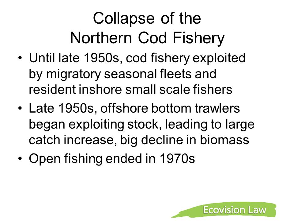 Collapse of the Northern Cod Fishery Until late 1950s, cod fishery exploited by migratory seasonal fleets and resident inshore small scale fishers Lat