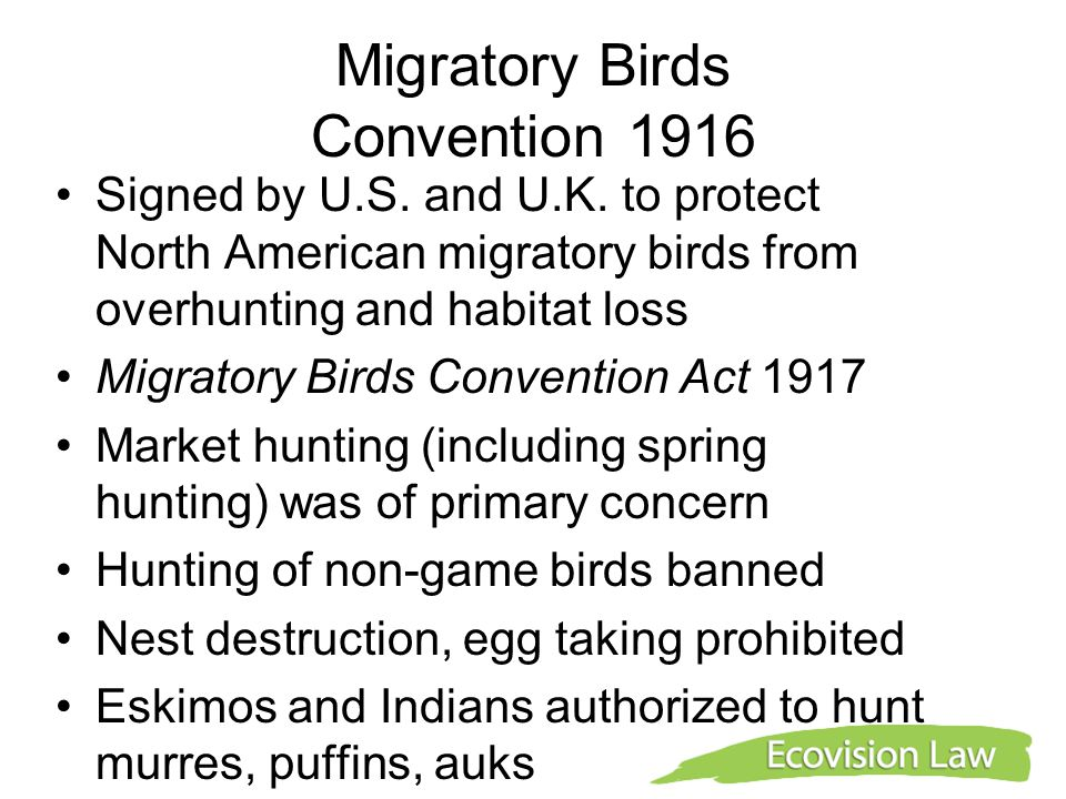 Migratory Birds Convention 1916 Signed by U.S. and U.K. to protect North American migratory birds from overhunting and habitat loss Migratory Birds Co