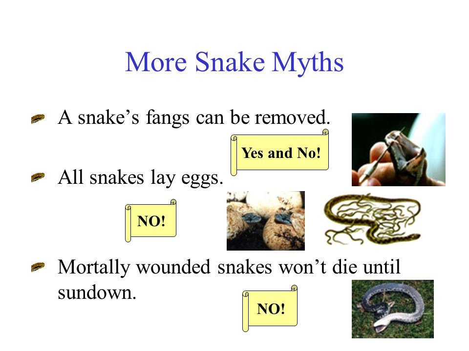 More Snake Myths Rattlesnakes add a new link to their rattle every year.
