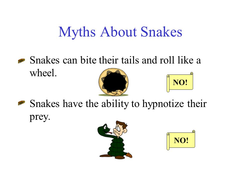Myths About Snakes Snakes can bite their tails and roll like a wheel.