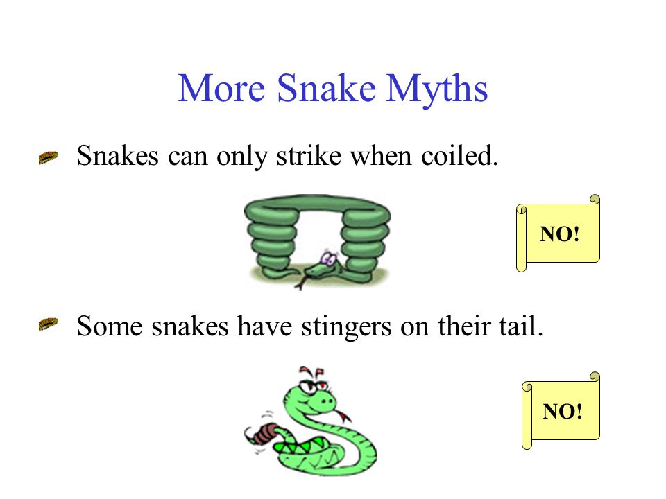 More Snake Myths Snakes are vengeful! Snakes are slimy. NO!